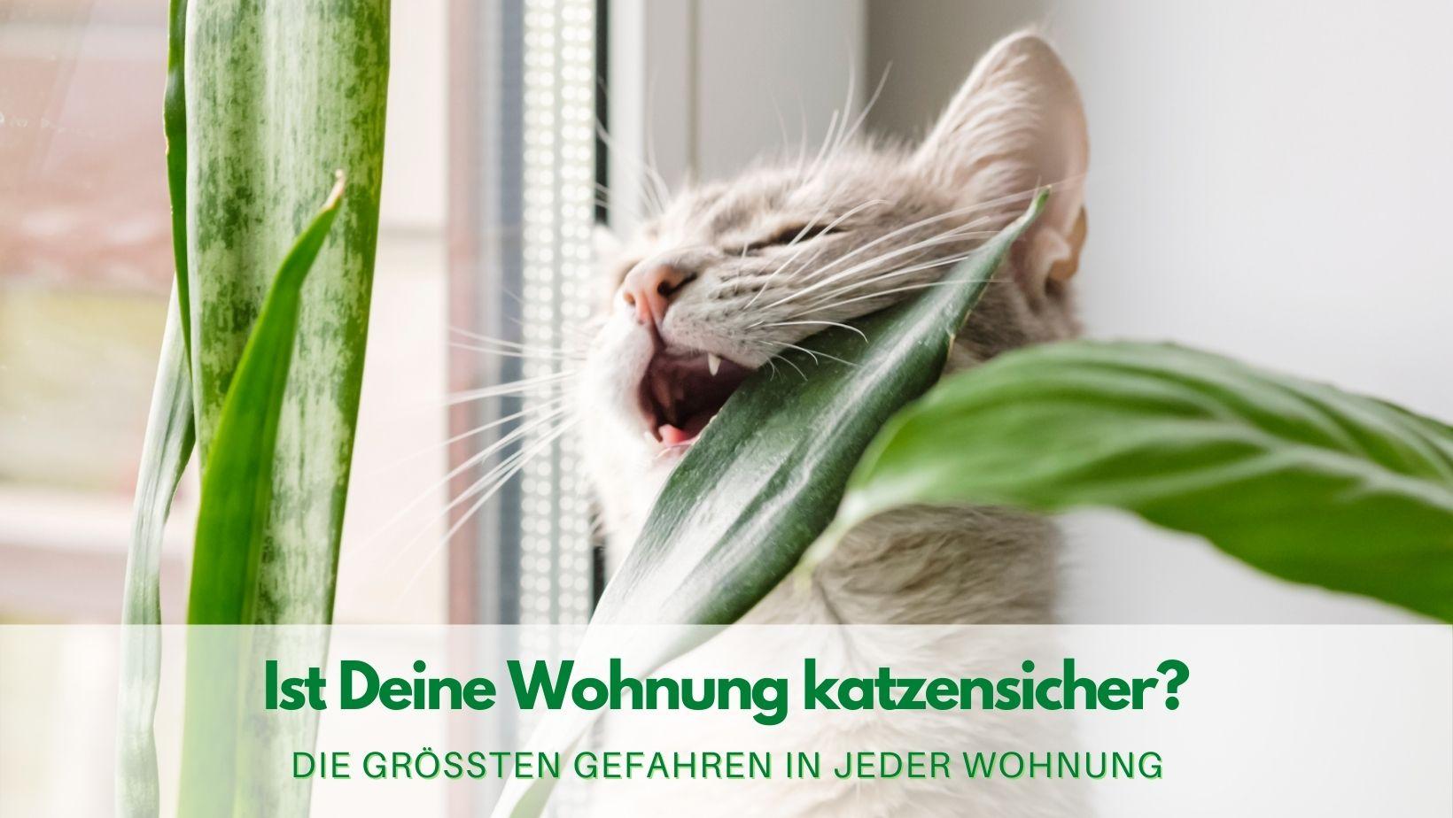 Ist deine Wohnung katzensicher?