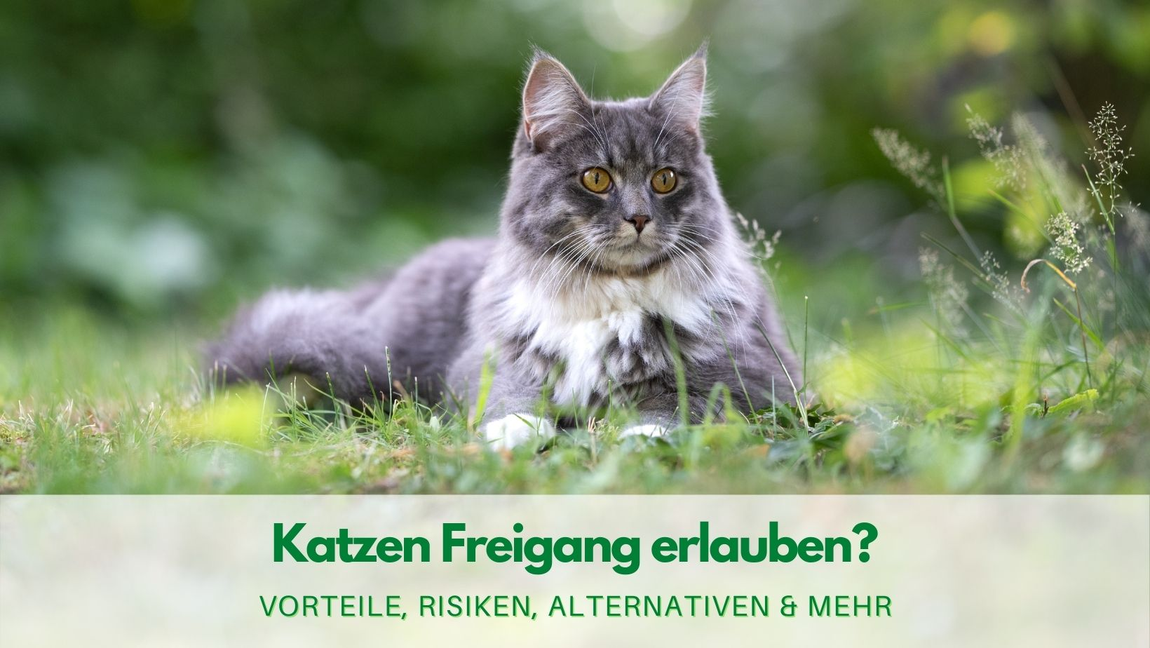 Katze Freigang gewähren?